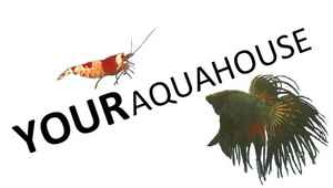 Your Aquahouse